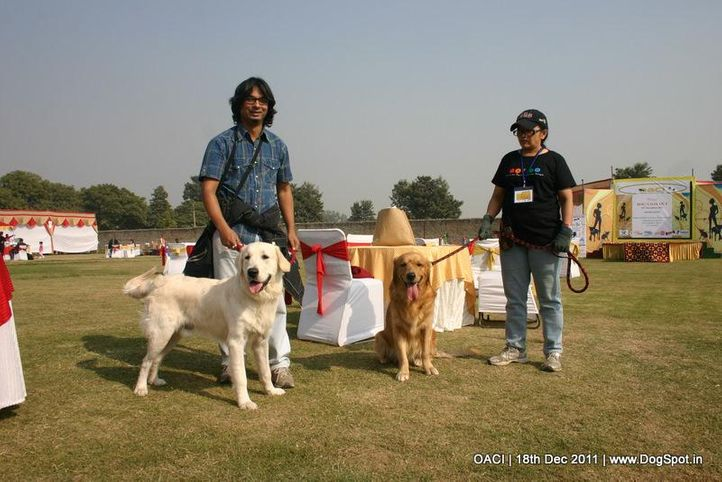 owners  pets,, DogSpot @ OACI, DogSpot.in