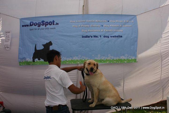 free grooming  oaci,, DogSpot @ OACI, DogSpot.in