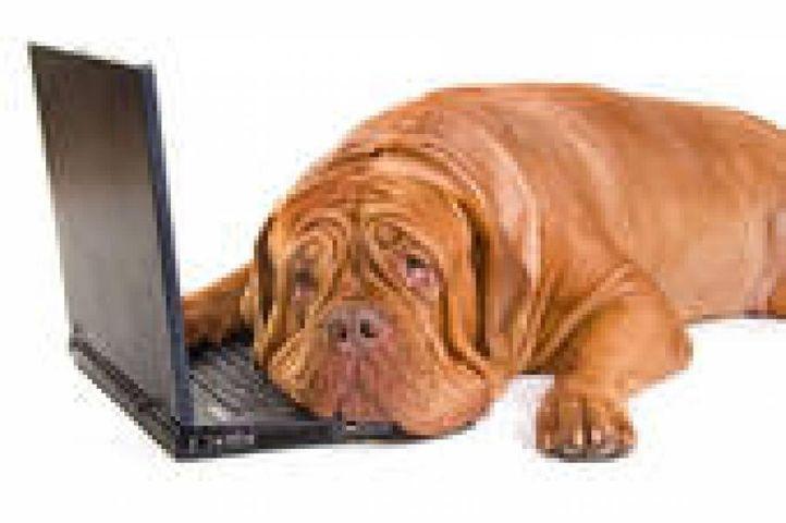dogue de bordeaux french mastiff, dogue de bordeaux (french mastiff), DogSpot.in