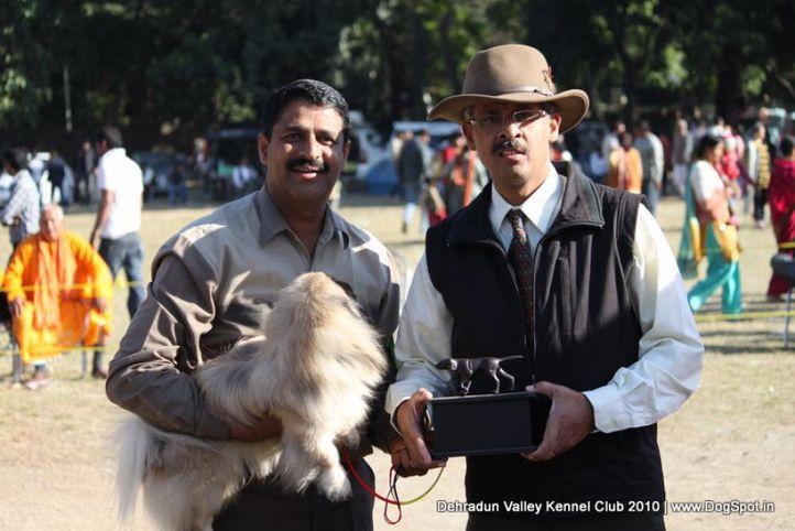 pekingese,sw-13,, Doon Valley Kennel Club, 5 Dec 2010, DogSpot.in