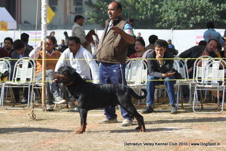 ex-201,rottwieler,sw-13,, IND. CH. ROSY'S CARLOS VON KELEMEN, Rottweiler, DogSpot.in