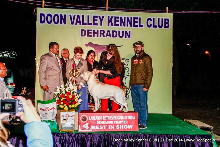labrador lineup,sw-143,, Doon Valley Kennel Club, DogSpot.in