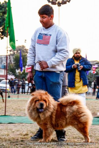 chow chow,sw-143,, Doon Valley Kennel Club, DogSpot.in