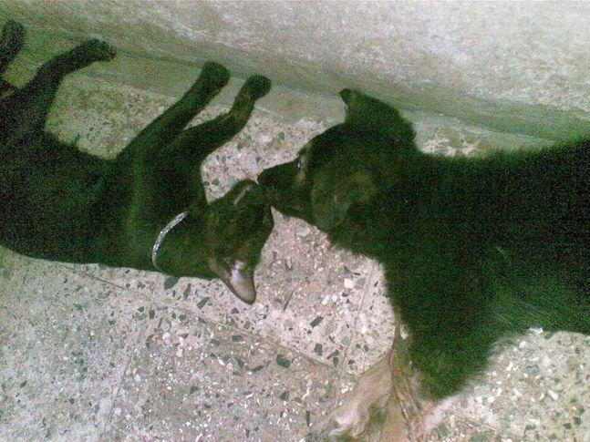 ethan  kali, Ethan & Kali, DogSpot.in