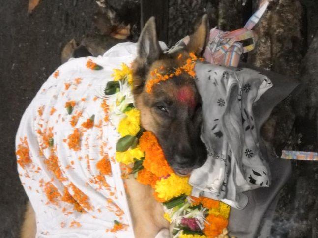 swapnils soni, farewell to soni my love, DogSpot.in