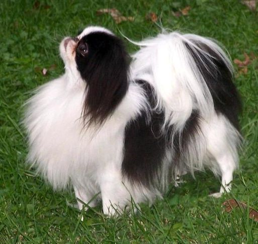 my fav dog breeds, my fav dog breeds, DogSpot.in