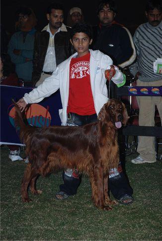 Best Junior Handler,, FCI 2008 Junior Handler, DogSpot.in