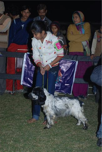 Best Junior Handler,, FCI 2008 Junior Handler, DogSpot.in