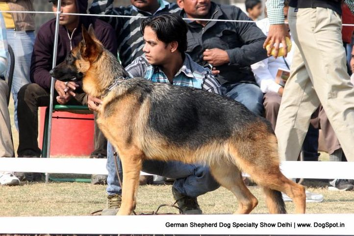 german shepherd dog specialty show delhi, German Shepherd Dog Specialty Show Delhi, DogSpot.in