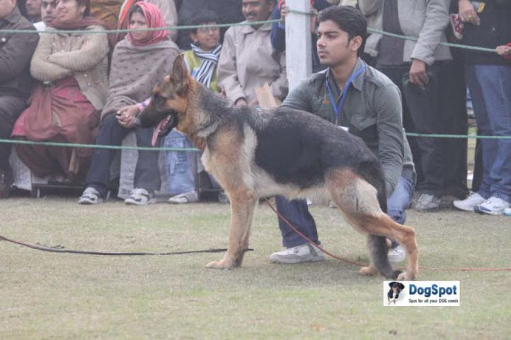 German Shepherd,, Ghaziabad Dog Show 2010, DogSpot.in