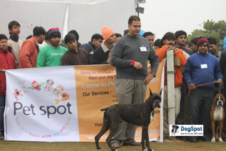 Boxer,, Ghaziabad Dog Show 2010, DogSpot.in