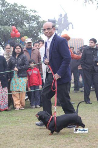 Daschund,, Ghaziabad Dog Show 2010, DogSpot.in