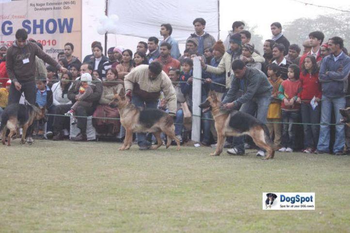 German Shepherd,, Ghaziabad Dog Show 2010, DogSpot.in