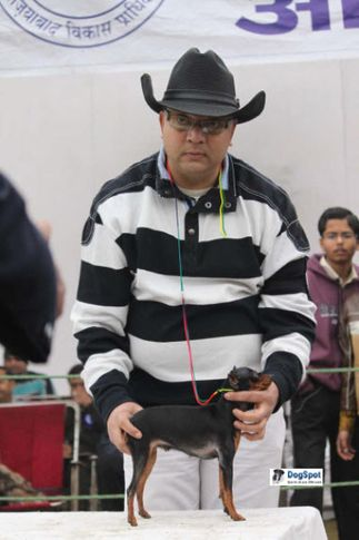 Minpin,, Ghaziabad Dog Show 2010, DogSpot.in
