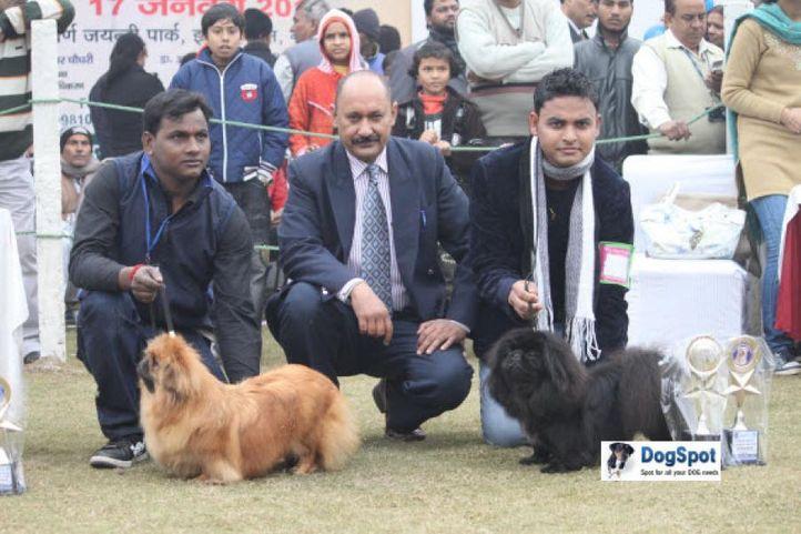 Pekingese,, Ghaziabad Dog Show 2010, DogSpot.in