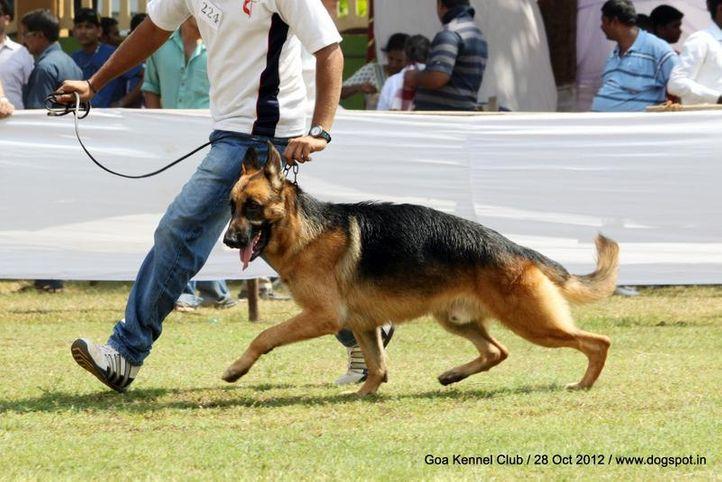ex-224,german shephard,sw-63,, YAKO, German Shepherd Dog, DogSpot.in