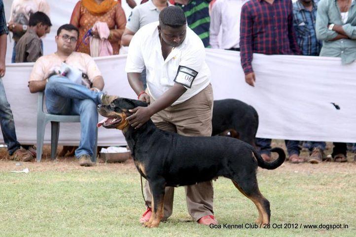 ex-206,rottweiler,sw-63,, SANYADORS JACQUET JIL, Rottweiler, DogSpot.in