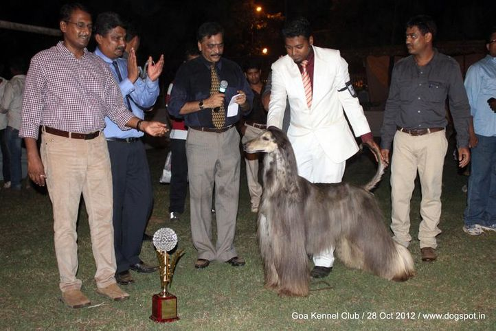 ex-44,final line up,sw-63,, AM. GCH. CH. RAFFICA'S VALYMIR SWEET VICTORY, Afghan Hound, DogSpot.in