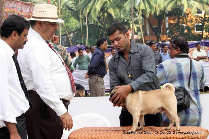 judges,sw-63,, Goa 2012, DogSpot.in