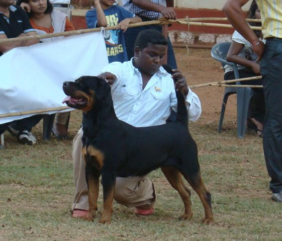goa dog show , Goa Dog Show ., DogSpot.in
