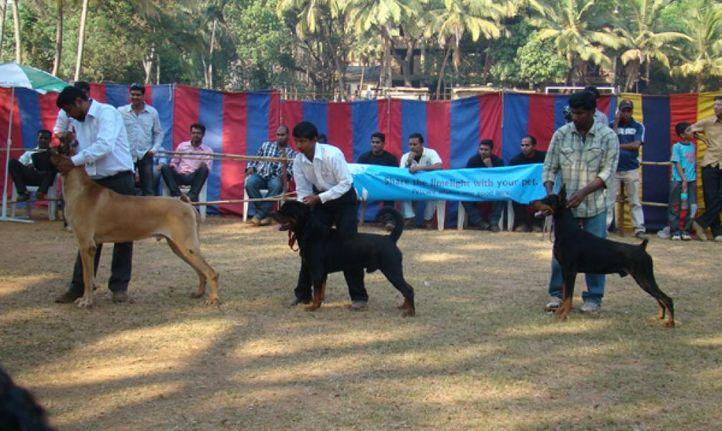 goa dog show , Goa Dog Show ., DogSpot.in