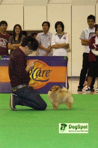 BullDog, Grand Show Thailand 2009, DogSpot.in