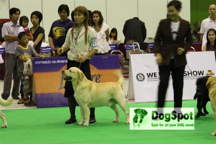 labrador,, Grand Show Thailand 2009, DogSpot.in