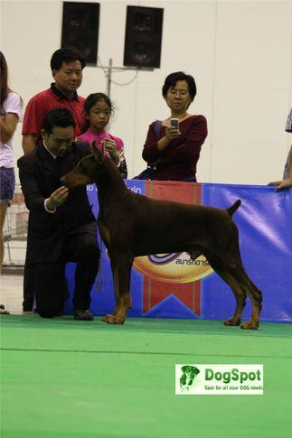 Doberman,, Grand Show Thailand 2009, DogSpot.in