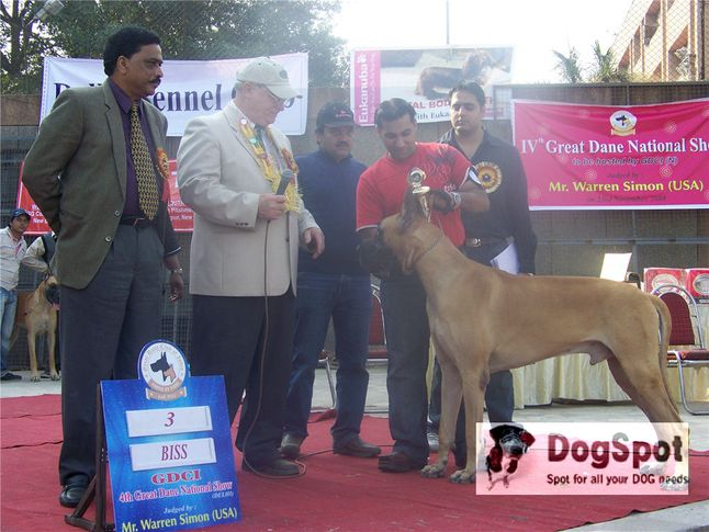 greatdane,prize,lineup,, Great Dane National Show- Delhi 2008, DogSpot.in