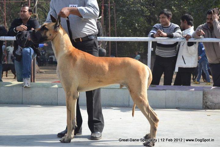 great dane speciality 2012, Great Dane Speciality 2012, DogSpot.in