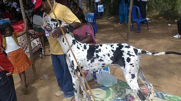 bangalore dog show photos, Great Dane, DogSpot.in
