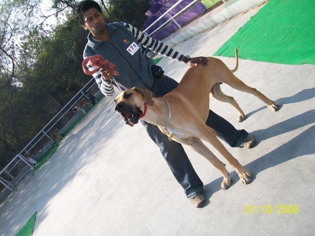 , Great Sultan, DogSpot.in