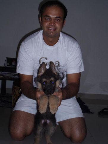 My GSD Puppy(BOSCO), My GSD Puppy(BOSCO), DogSpot.in