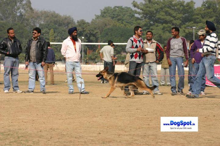 , GSD Speciality Delhi, DogSpot.in