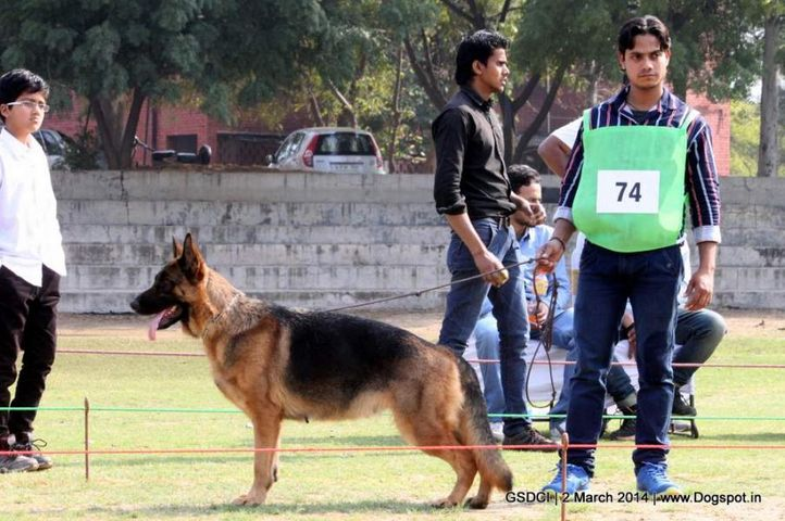 ex-74,sw-119,, ZEPHYR'S SWEETY, German shepherd dog, DogSpot.in