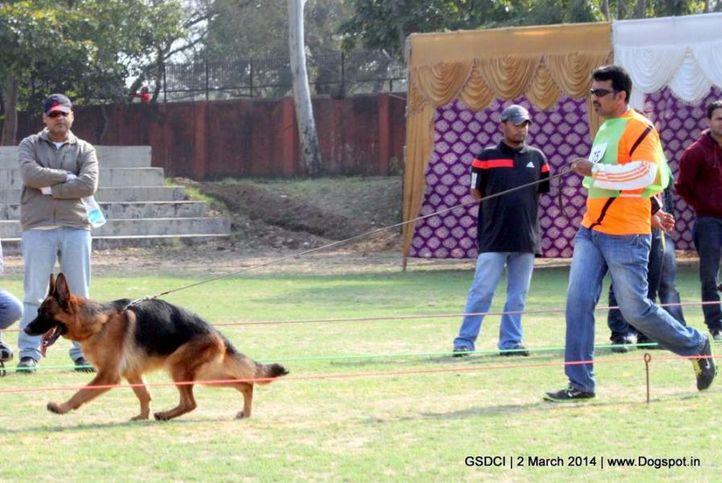 ex-75,sw-119,, VANESSIA VON AURELIUS, German shepherd dog, DogSpot.in