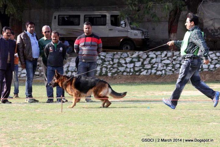 ex-112,sw-119,, AROC VON HAUS SHERGILL, German shepherd dog, DogSpot.in