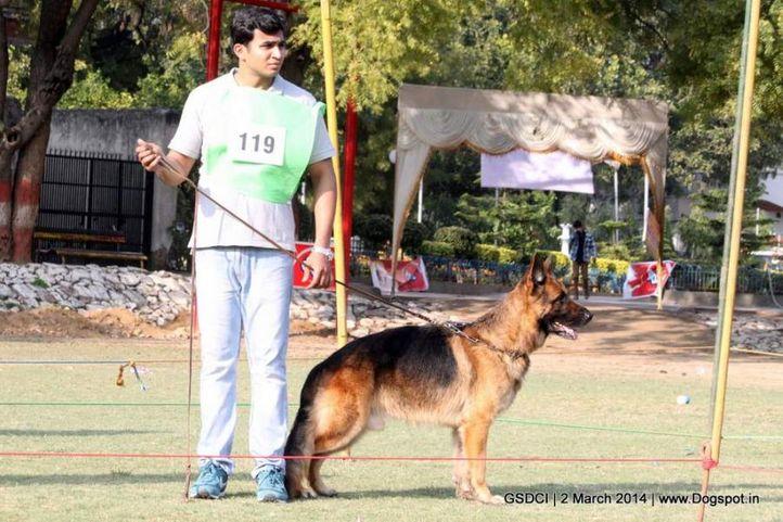 ex-119,sw-119,, Vito Hauz Christa, German shepherd dog, DogSpot.in