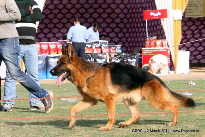 ex-107,sw-119,, LIMBO OF ZEDEX, German shepherd dog, DogSpot.in