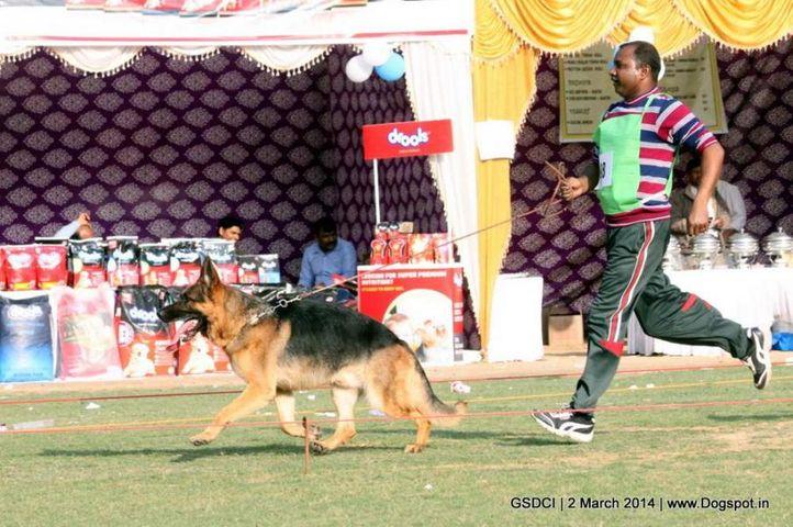 ex-98,sw-119,, JAMES BOND VON ATHABA, German shepherd dog, DogSpot.in