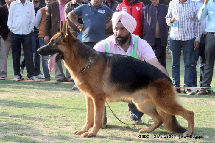 ex-107,sw-119,, LIMBO OF ZEDEX, German shepherd dog, DogSpot.in