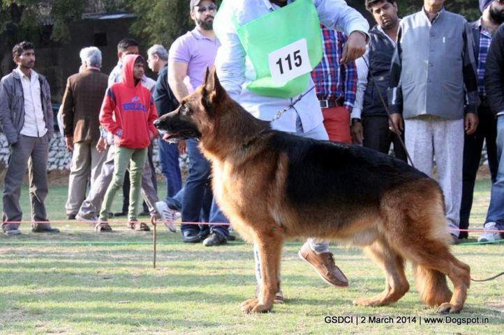 ex-115,sw-119,, NANDO VAN DER HERDERFARM, German shepherd dog, DogSpot.in