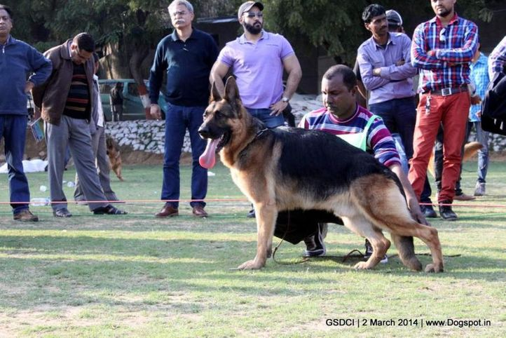 ex-98,sw-119,, JAMES BOND VON ATHABA, German shepherd dog, DogSpot.in