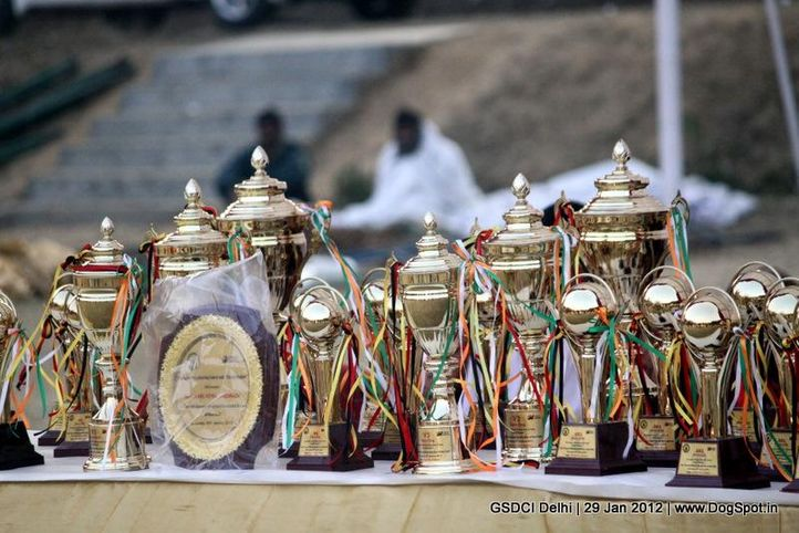 trophies,, GSDCI Delhi, DogSpot.in