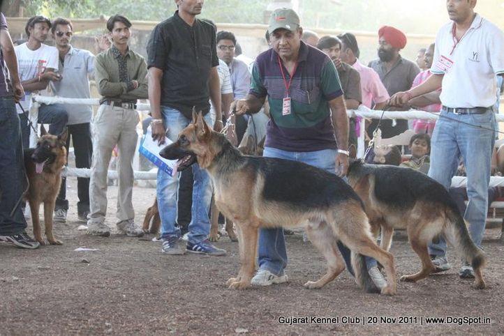 ex-178,gsd,sw-44,, Gujarat Kennel Club, DogSpot.in