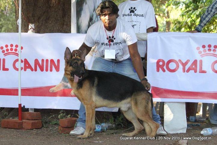 ex-179,gsd,sw-44,, Gujarat Kennel Club, DogSpot.in