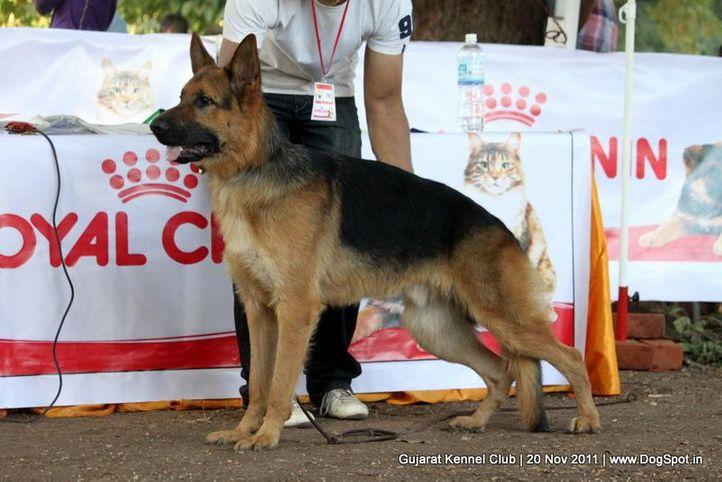 ex-194,gsd,sw-44,, Gujarat Kennel Club, DogSpot.in