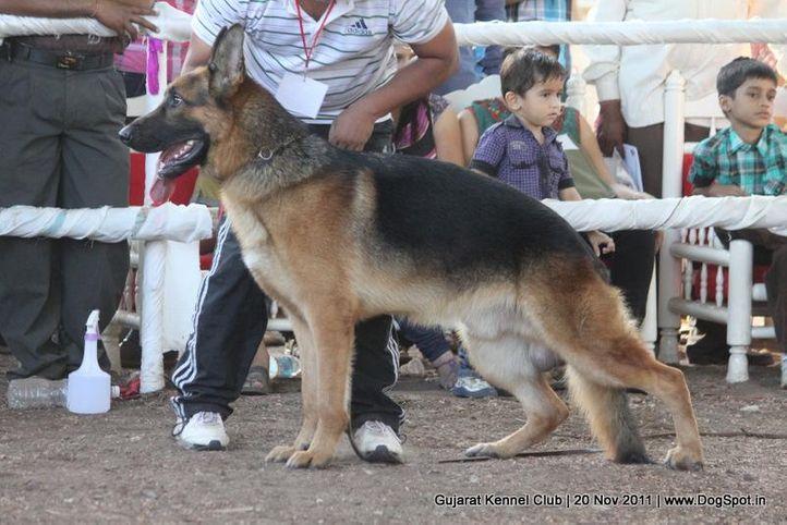 ex-196,gsd,sw-44,, Gujarat Kennel Club, DogSpot.in