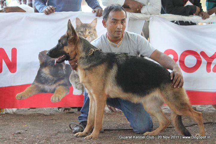 ex-197,gsd,sw-44,, Gujarat Kennel Club, DogSpot.in