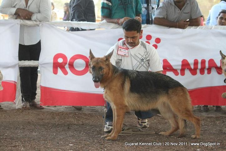 ex-199,gsd,sw-44,, Gujarat Kennel Club, DogSpot.in